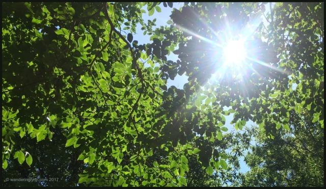 trees_sun.jpg