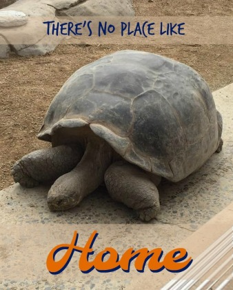 turtle home.jpg